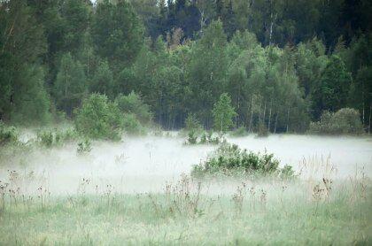 туман в низине