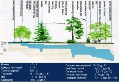 Растения-индикаторы подземных вод
