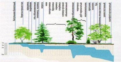 Присутствие различных растений в зависимости от уровня залегающих вод