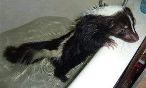 Почему пахнет канализацией в ванной?