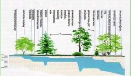 Пример зависимости растительности от УГВ