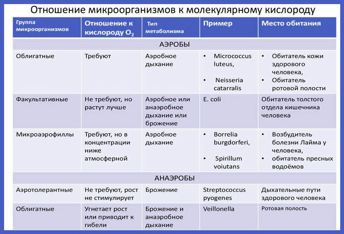 Отношение микроорганизмов к молекулярному кислороду